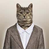 European Shorthair wearing a suit in front of a beige background — Stock Photo