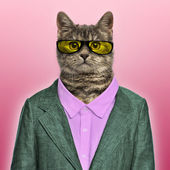 Stylish European Shorthair wearing a suit and sunglasses in fron — Stock Photo