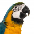 Close-up of a Blue-and-yellow Macaw (14 weeks old) isloated on w — Stock Photo #49125033