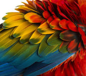 Close-up on a Scarlet Macaw feathers (4 years old) isolated on w — Foto de Stock
