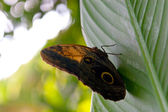 Butterfly on a leaf — ストック写真