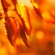 Dried autumn leaves — Stock Photo #13552343