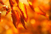 Dried autumn leaves — Stock Photo