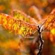Autumn branches in the sunlight — Stock Photo #14285081