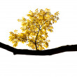 Autumn branch on a white background — Stock Photo #14285159