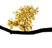 Herbst zweig auf weißem hintergrund — Stockfoto