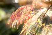 Höstfärger i solljus — Stockfoto