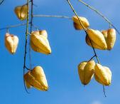 Autumn fruits against sky — Stock Photo