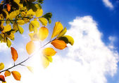 Autumn leaves against sky — Stock Photo