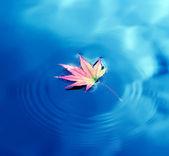 Autumn maple leaf on water — Stock Photo