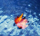 Autumn withered leaf on the water — Stock Photo