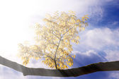 Branch with autumn leaves in the sunlight — Stock Photo