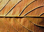 Bir sonbahar yaprak güneş ışığı altında arka plan — Stok fotoğraf