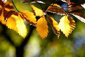 Bruna höstlöv i en skog — Stockfoto