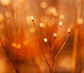 бутоны сорняков в лучах солнца — Стоковое фото
