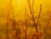 Dried weed in the sunlight — Stock Photo