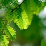 Green fir branch in a forest — Stock Photo