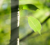 Green leaves on a tree in sunbeams — Stock Photo