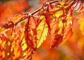 Multicolored autumn leaves in sunlight — Stock Photo