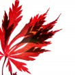 Red maple leaf against  white sky - Stock Photo