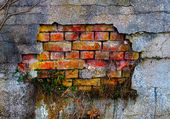 The grass on a old damaged plaster and brick wall — Stock Photo