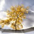 Autumn branch in the sunlight — Stock Photo