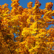 Autumn branches against the sky — Stock Photo