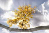 Autumn branch in the sunlight — Stock Photo