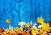 Autumn leaves at the blue wall — Stock Photo