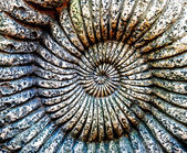 Fossil of Ammonite in a stone — Stock Photo