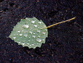 Leaf on pavement after the rain — Stock Photo