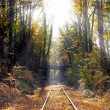 Royalty-Free Stock Photo: Railway in the forest in the sunlight