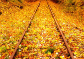 Railway in the autumn forest — Foto de Stock