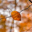 Autumn leaf lying on the tree branch — Stock Photo
