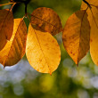 Stock Photo: Autumn leaves on a tree in the forest