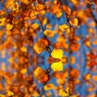 The autumn birch leaves in the sunlight in the water — Stock Photo