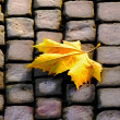 The autumn leaf on pavement — Stock Photo