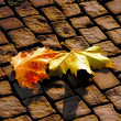 The autumn leaves on pavement — Stock Photo
