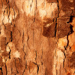 The bark of the tree in the sunshine — Stock Photo
