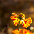 Stock Photo: Wilted flower in sunlight