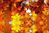 Autumn oak leaves in sunlight in the water — Stock Photo