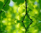 Gren med färska blad i skogen i vattnet — Stockfoto
