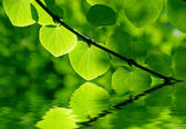 Green leaves in a forest in the sunlight in the water — Zdjęcie stockowe