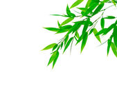 Green bamboo leaves on white background — Stock Photo