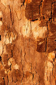 The bark of the tree in the sunlight — Stock Photo