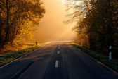 The road passing through the forest — Stock Photo