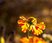 Wilted flower in the sunlight — Stock Photo