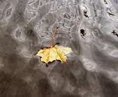 Hoja de arce otoñal en el agua — Foto de Stock