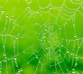 Dew drops on a spider web — Stock Photo
