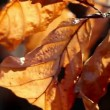 Royalty-Free Stock Obraz wektorowy: Autumn dry leaves in  wind